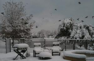 """Historic snowstorm in North Texas on 2/12/2010. DFW recorded its greatest 24-hour snowfall of all time (12.5"""")."""