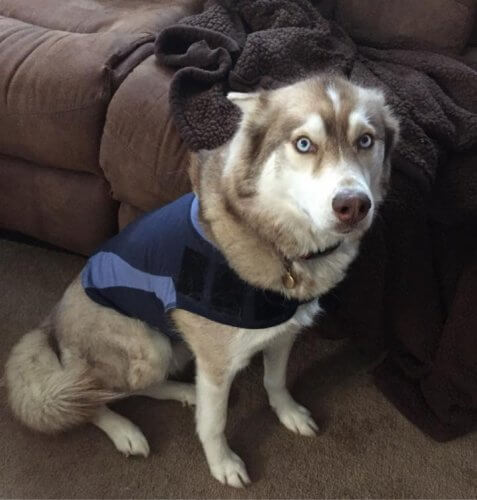 What Can I Do To Calm My Dog S Anxiety
